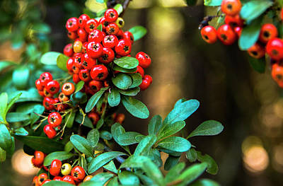 Los Angeles Photograph - Berries by Matthew Frey