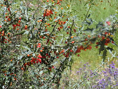 Berries On The Vine Art Print