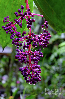 Photograph - Berries Or Flowers by Mini Arora