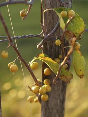 Berries Original