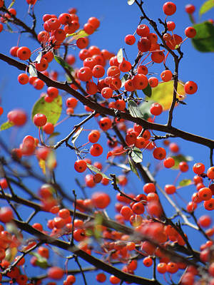 Photograph - Berry Bunches by Jamie Johnson
