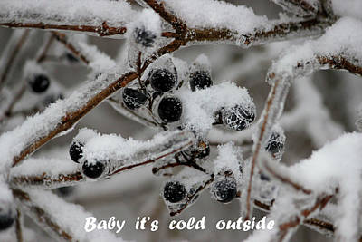 Photograph - Berry Cold by Jewels Blake Hamrick