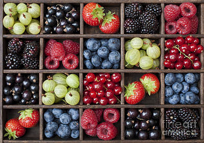 Berry Harvest Art Print by Tim Gainey