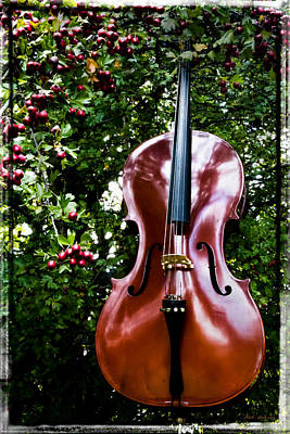 Photograph - Berry Mellow Cello by Mick Anderson