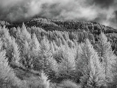 Photograph - Berry Summit In Infrared by Greg Nyquist