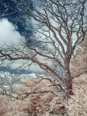 Photograph - Berry Summit Tree In False Color by Greg Nyquist