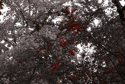 Berry Trees Art Print by Bill Ades