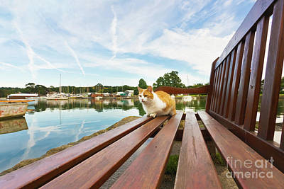 Photograph - Bert The Mylor Bridge Cat by Terri Waters