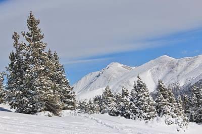 Blue Hues - Berthoud Pass Winter 3 by Tonya Hance
