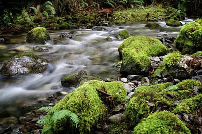 Rainforest Stream Art Print by Margaret Goodwin