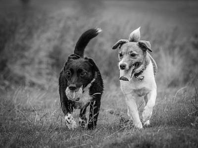 Photograph - Best Buddies by Nick Bywater