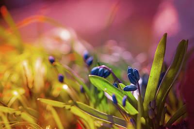 Photograph - Best Buds  by Bulik Elena