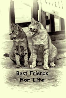 Mixed Media - Best Friends For Life by Pamela Walton
