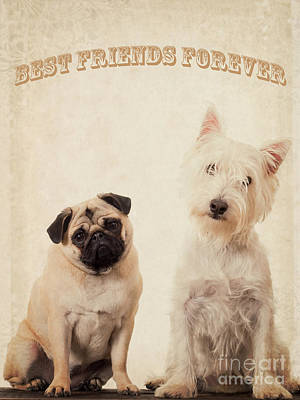 Best Friend Photograph - Best Friends Forever by Edward Fielding