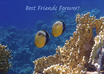 Photograph - Best Friends Forever by Johanna Hurmerinta