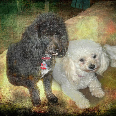 Photograph - Best Friends by Judy Hall-Folde