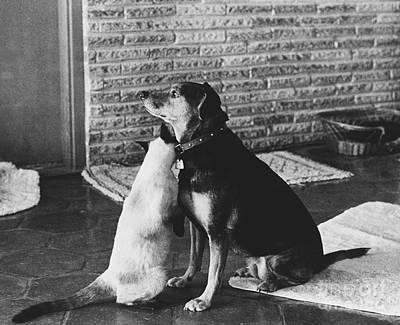 Animal Portraiture Photograph - Best Friends by Lynn Lennon