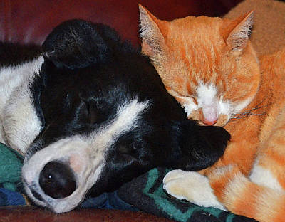 Sleeping Dog Digital Art - Best Friends by Susie Fisher