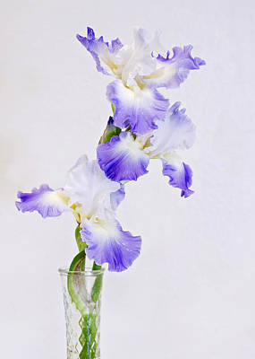 Purple Iris Photograph - Best In Show by Heather Applegate