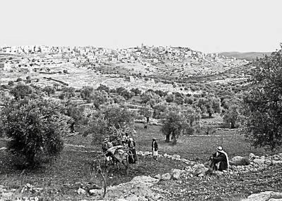 Photograph - Bethlehem Olive Harvest by Munir Alawi