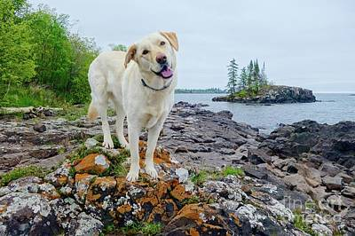 Photograph - Betsy On The Superior Hiking Trail by Sandra Updyke