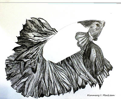 Drawing - Betta Drawing by Kimmary I MacLean