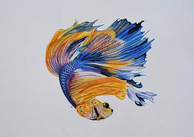 Betta Fish 3 Art Print