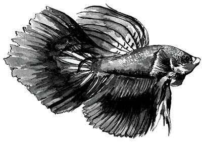 Animals Drawings - Betta Fish by Stephany Elsworth