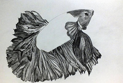 Drawing - Betta Sketch by Kimmary MacLean