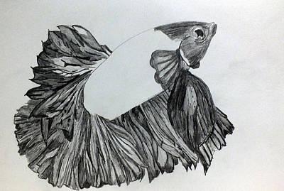 Betta Sketch Art Print by Kimmary I MacLean