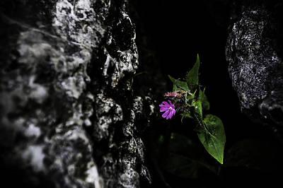 Photograph - Between A Rock by Chris Coffee