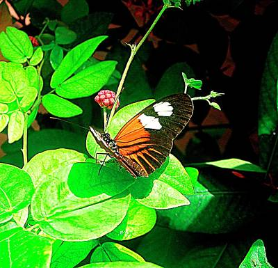 Flutter Photograph - Between Pins by Mario Perez
