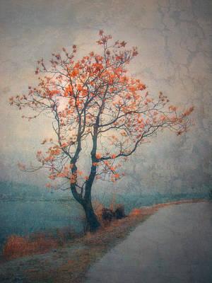 Photograph - Between Seasons by Tara Turner