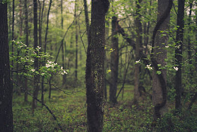 Dogwood Photograph - Between The Dogwoods by Shane Holsclaw