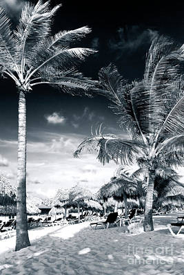 Photograph - Between The Palm Trees by John Rizzuto