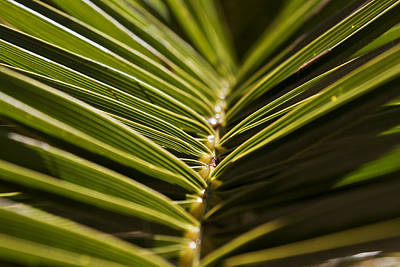 Photograph - Between The Palms by Stewart Scott
