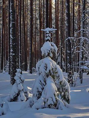 Photograph - Between The Pines by Jouko Lehto