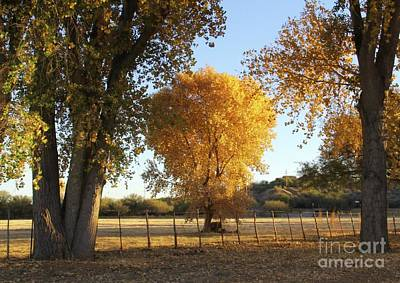 Photograph - Between The Trees  by Suzanne Oesterling