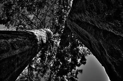 Photograph - Between Two Sequoias by Roger Passman