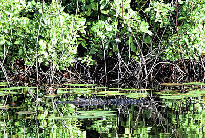 Photograph - Beware The Lurking Gator by William Tasker