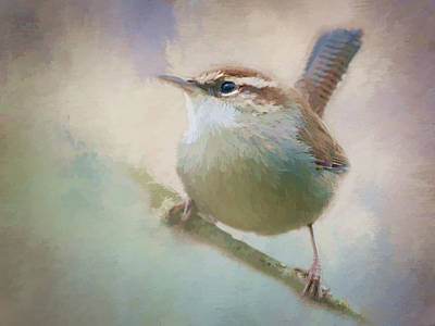 Bewicks Wren - 365-131 Art Print by Inge Riis McDonald