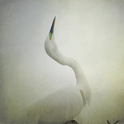 Egret Photograph - Bewitched by Fraida Gutovich