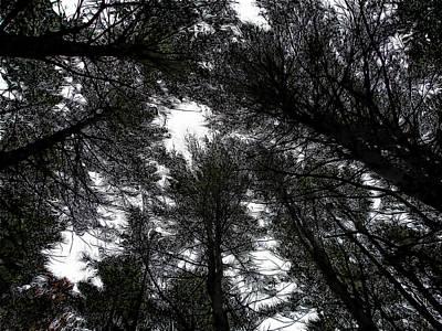 Digital Art - Beyond The Pines by Leslie Montgomery
