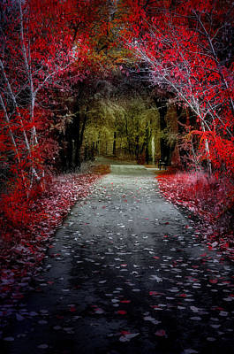 Reality Photograph - Beyond The Red Leaves by Tara Turner