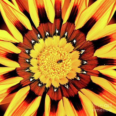Photograph - Beyond The Surface by Third Eye Perspectives Photographic Fine Art