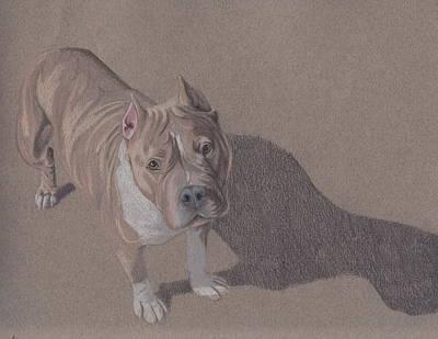 Pitbull Drawing - Bezel by Stacey Jasmin