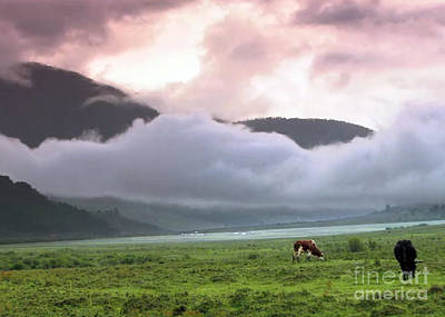 Photograph - Bhutan Landscape Cows Grazing Mountains Clouds  by Navin Joshi