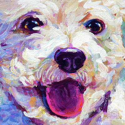 Painting - Bichon Frise Face by Robert Phelps