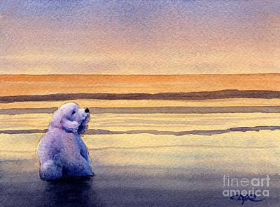 Bichon Frise Sunset Art Print by David Rogers