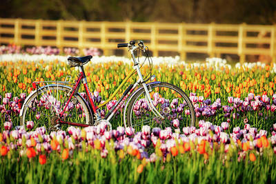 Photograph - Bicycle And Tulips by Jerry Fornarotto